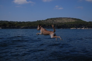 Hazel Flying off the Swim Dock