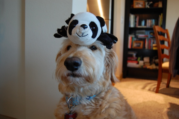 Stinky Panda on Hazel's Head